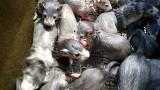 Jak wygląda naprawdę przemysł futerkowy w Wielkopolsce? To tylko krwawy biznes czy zapewniony jest dobrostan zwierząt? Zobacz zdjęcia