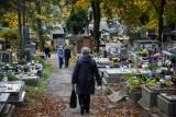 Nowy cmentarz we Wrocławiu. To będzie drugie największe miejsce pochówku w mieście