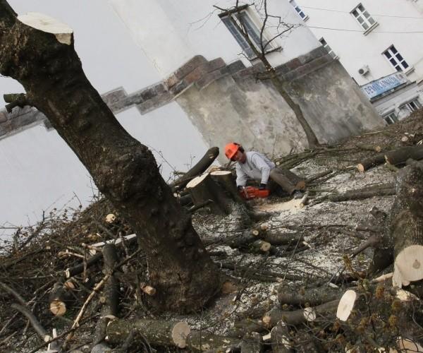Dziś wycinano drzewa od strony Lipowej.