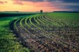 Premie dla młodych rolników i restrukturyzacja gospodarstw 2021 - do kiedy ARiMR przyjmuje wnioski?