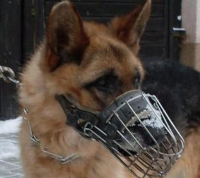 Chłodny Policja ogłosiła przetarg na sprzedaż... psa. Bo jest stary i WK11