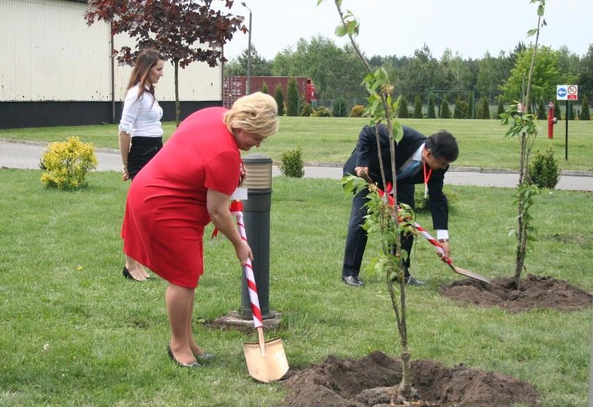 Pani wójt i pan ambasador sadzą japońskie wiśnie