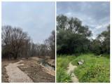 Kraków. Tworzą park rzeczny Wilga. Czy przyroda zostanie uszanowana?