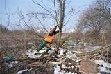 W Tarnobrzegu trwa wycinka drzew pod budowę obwodnicy. Piły przy działkach i dworcu kolejowym (WIDEO, ZDJĘCIA)