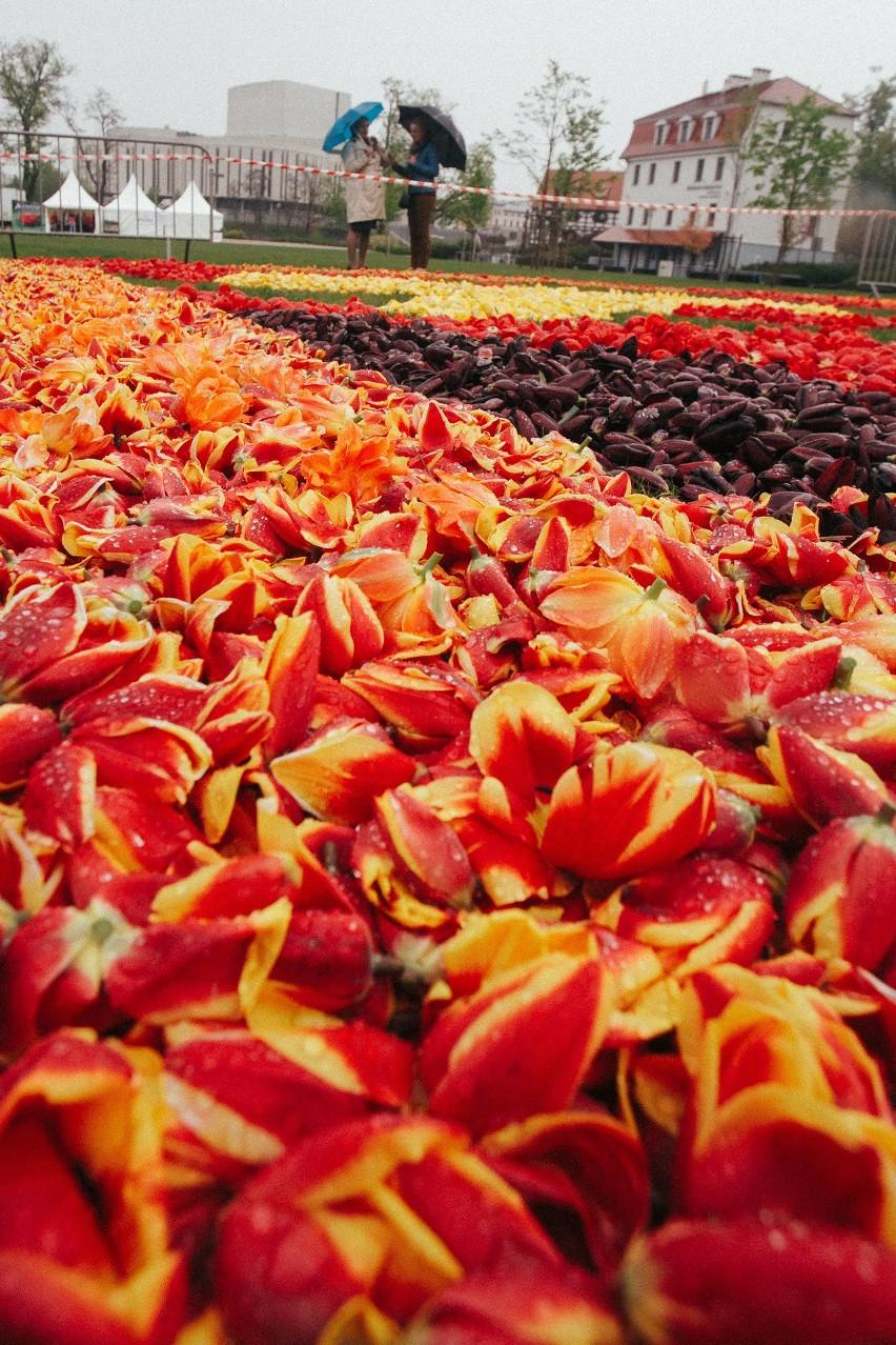 Bydgoskie Dywany Kwiatowe W Deszczu Zdjęcia Express Bydgoski