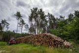 Mieszkańcy bydgoskiej Smukały boją się, że las pójdzie pod topór i obok cmentarza wyrośnie osiedle