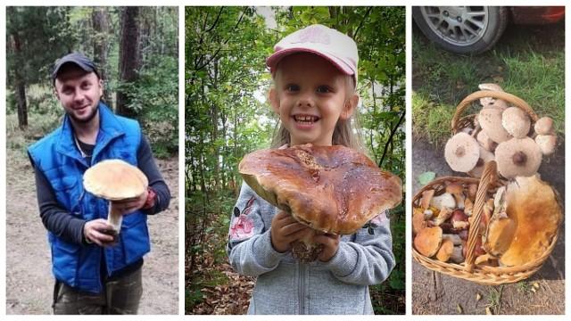 Na kolejnych zdjęciach okazy, które nasi Czytelnicy znaleźli w kujawsko-pomorskich lasach!