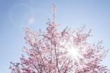 Immunolog radzi: Idźcie na spacer. Korzystajcie ze słońca!