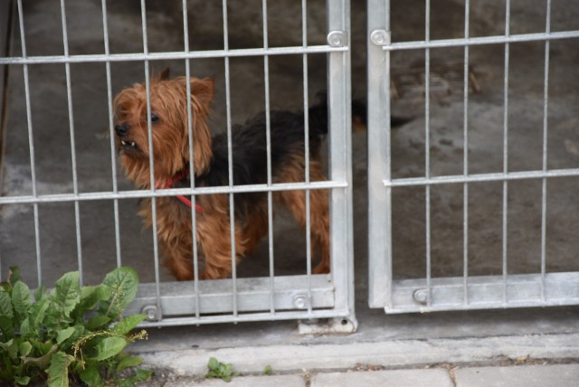 W Centrum Opieki nad Zwierzętami znajduje się około 400. zwierząt