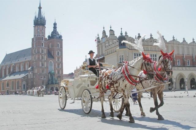 Konie na Rynku w Krakowie nie cierpią