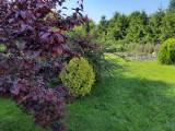 Mieszkanie z ogródkiem we Wrocławiu - najciekawsze oferty w dobrej cenie