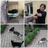 Opiekuje się ponad 45 kotami. I prosi o pomoc [ZDJĘCIA]