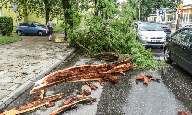 W nocy wielkopolscy strażacy interweniowali ponad 100 razy. Z powodu silnego wiatru drogi tarasowały powalone gałęzie, a w niektórych miejscowościach zostały zerwane linie energetyczne.