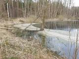 W Leśnictwie Gródek ktoś zrzucił ścieki do bagna. To kolejny tego rodzaju przypadek w Kujawsko-Pomorskiem!