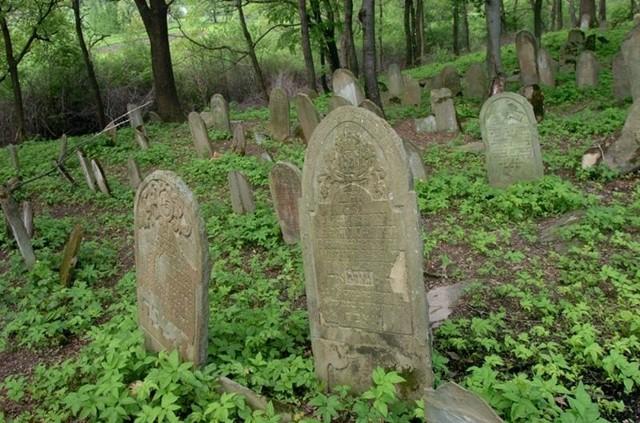 Cmentarz zydowski w Nowym ZmigrodzieUporządkowany cmentarz zydowski w Nowym Zmigrodzie. Prace porządkowe wykonalo Towarzystwo Milośników Nowego Zmigrodu. Za zgodą konserwatora zabytków wycieto cześc drzew oraz krzewów i oczyszczono macewy.
