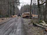 Trzebinia. Trwa wycinka Puszczy Dulowskiej. Ludzie nie odpuszczają i walczą o drzewa. Nie chcą Pustyni Dulowskiej [ZDJĘCIA]
