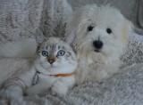 Właściciele psów i kotów są odporniejsi na koronawirusa? Według lekarki z Hiszpanii zwierzęta domowe mogą zwiększać odporność u człowieka