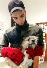 """Interwencja """"Bezdomnego Kundelka"""" w Miastku. Trzy cierpiące psy zostały zabrane (ZDJĘCIA)"""
