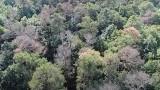 Dron Nadleśnictwa Rzepin nagrał brązowe plamy na tle zieleni. Usychają sosny w Puszczy Rzepińskiej