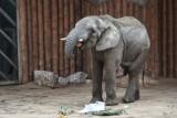 Słoń na autostradzie - czyli nietypowe przypadki z szybkich dróg samochodowych. Sprawdź, co zdarzyło się na wielkopolskiej A2