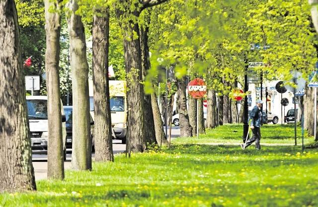 Wśród projektów znalazło się zagospodarownie pasa zieleni między jezdniami, wzdłuż ul. Walki Młodych (ok. 350 tys. zł)