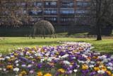 Prognoza pogody na Wielkanoc. Gdzie ta wiosna? Od piątku znów spadek temperatur
