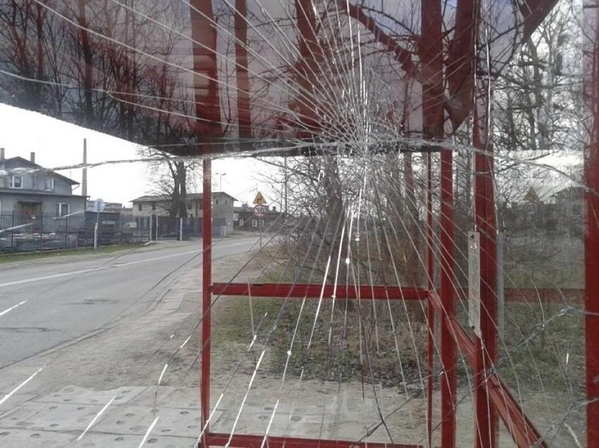 Myszołów uderzył w wiatę przystanku w Wejherowie [ZDJĘCIA]...