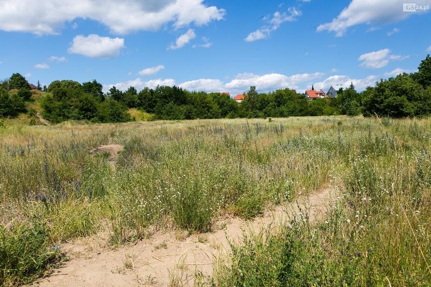 """""""Naturalne i spontaniczne łąki"""" w Szczecinie? Jest pomysł"""