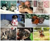 Światowy Dzień Zwierząt 2018. Pupile czytelników Gazety Lubuskiej to nie tylko koty i psy. Takie zwierzaki mamy w swoich domach!