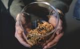 Mole w mieszkaniu. Domowe sposoby na pozbycie się moli spożywczych i ubraniowych