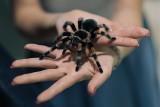 Jadowite pająki opanowały Galerię Malta [ZDJĘCIA]
