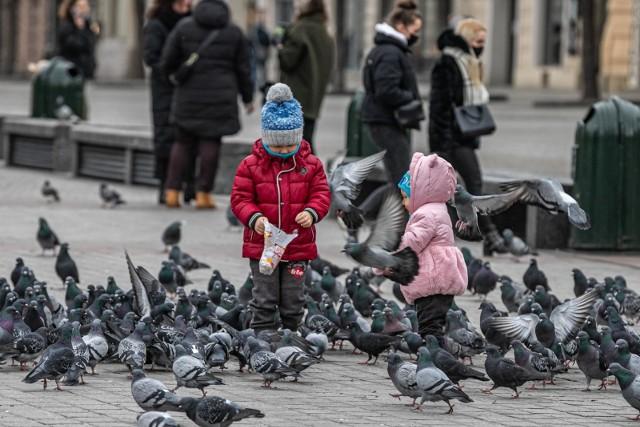 Centrum już nie jest bezludne, a gołębie z Rynku samotne