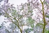 Krzywego Las na kolejnym etapie rewitalizacji. Szyszki trafiły do wyłuszczarni