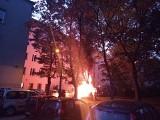 Animal Patrol Straży Miejskiej w Łodzi - ratowali zająca, wykryli groźny pożar