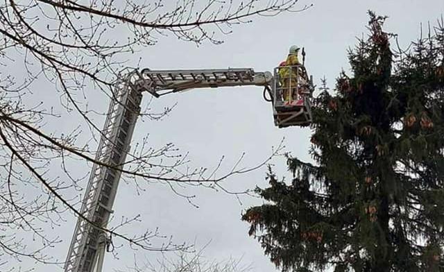 Strażacy odblokowali bocianom dostęp do gniazda