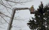Czarnowo-Undy: Bociany mogą wracać. Strażacy odblokowali dostęp do gniazda (zdjęcia)