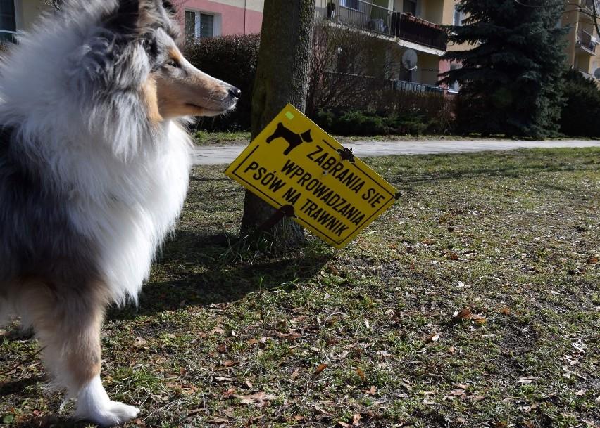 Taka tabliczka na trawniku, postawiona decyzją wspólnoty...
