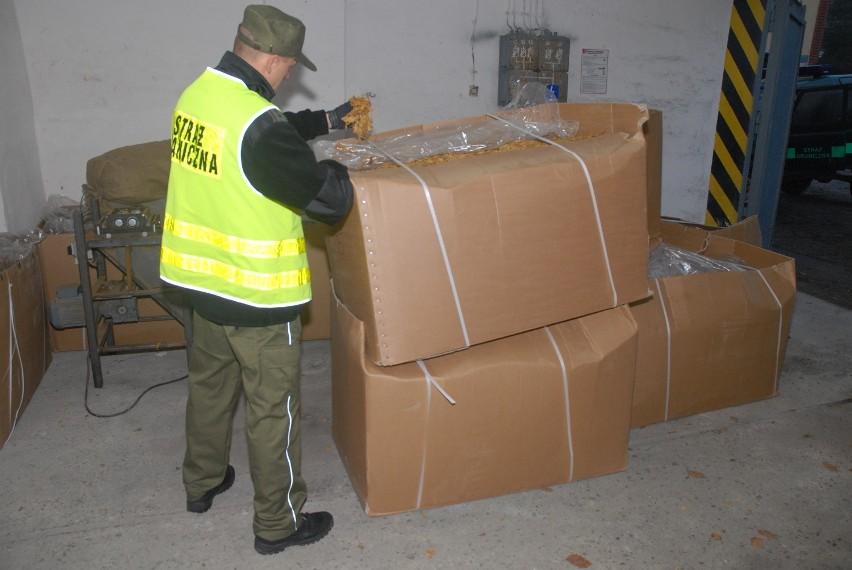 Lębork. Strażnicy odkryli fabrykę tytoniu. Znaleźli towar o wartości 700 tys. zł [ZDJĘCIA]