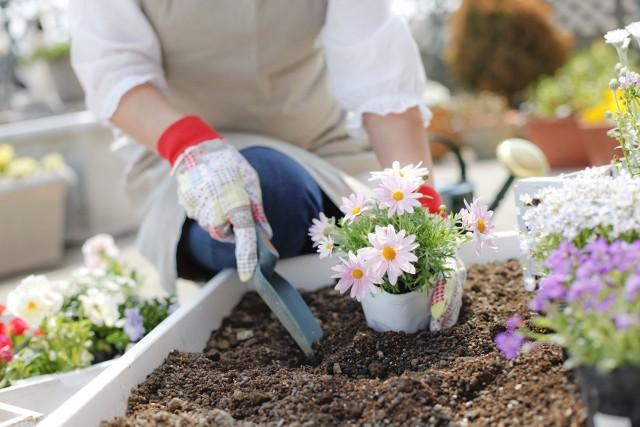 Porządki na balkonie Balkon może być również namiastką ogródka. Możemy hodować nanim kwiaty lub zioła.