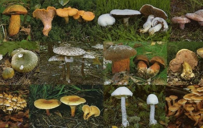 Kiedy będą grzyby 2018? Sezon na grzyby 2018. Gdzie warto wybrać się na grzyby? Gdzie są grzyby?
