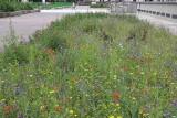 Łąki kwietne są zakładane w łódzkich parkach i na ulicach, ule stoją na dachach