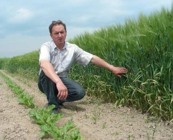 Zboże już wyrosło - pokazuje Jan Smiatek - Trudniej dostrzec drapieżnika z bezpiecznej odległości.