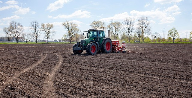 Zimna wiosna nie sprzyja kukurydzy