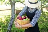 11 zadań na jesień w ogrodzie. Te prace warto wykonać, by na wiosnę nie było strat