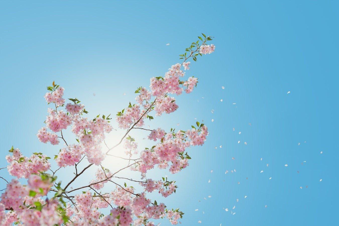 Pierwszy Dzień Wiosny Wiosna 2019 Rozpoczyna Się 21 Marca