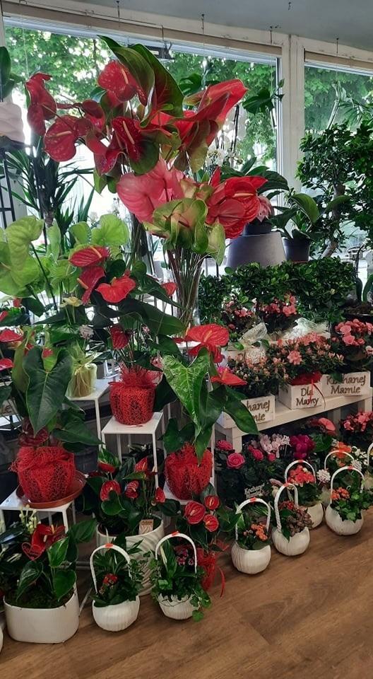 Kwiaciarnia Toma – kilkunastoletnie doświadczenie przepełnione profesjonalizmem z miłości do kwiatów