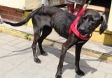 Zagłodzone psy trafiły do łódzkiego schroniska przy ul. Marmurowej. Porzucone w lesie i przed sklepem