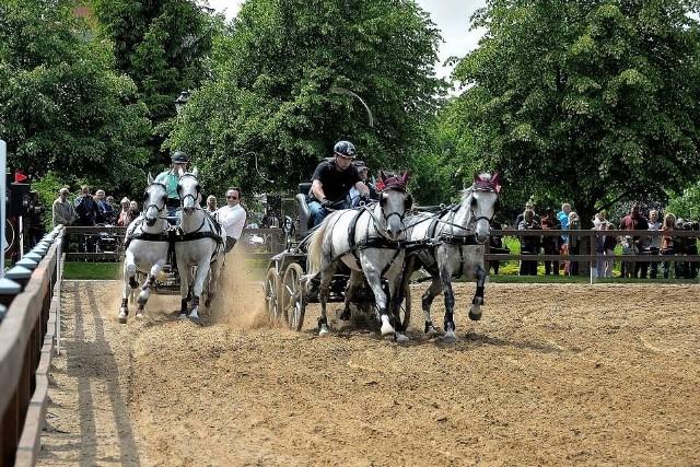 Podczas XIV Święta Konia w Pałacu Mierzęcin w powożeniu zmierzą się ze sobą najlepsze zaprzęgi konne.