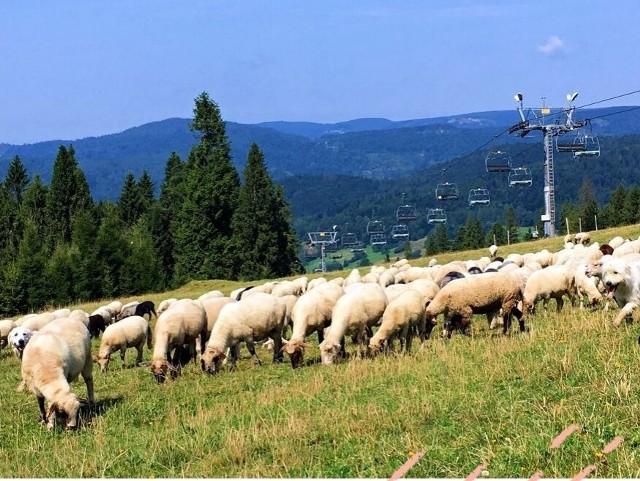 W każdy weekend do wakacji wyciąg w Wierchomli będzie otwarty od 10 do 16.
