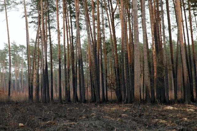 Polskie lasy kryją mnóstwo tajemnic.